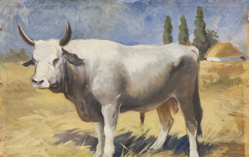 Корова. Фото Предоставлено Дарвиновским музеем