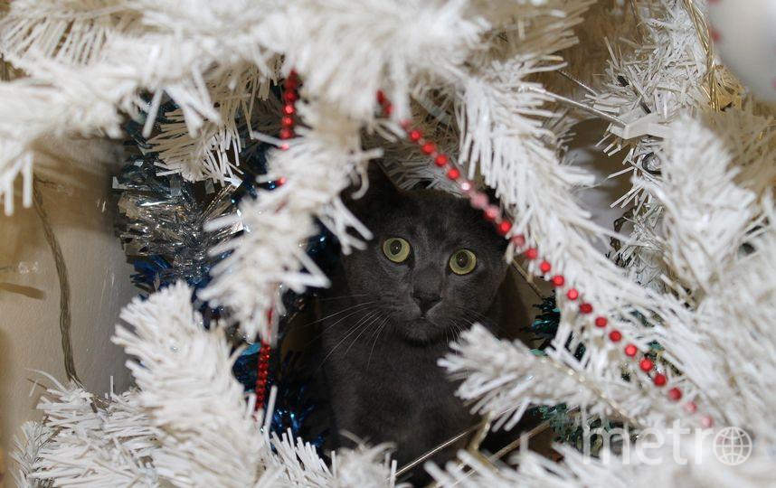 Новый год и кот. Фото pixabay.com