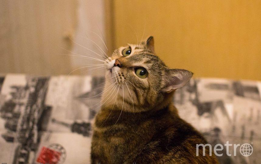 """Кошка  Френси. Фото """"Metro"""""""