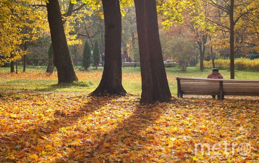 """Осень, 2018. Фото """"Metro"""""""