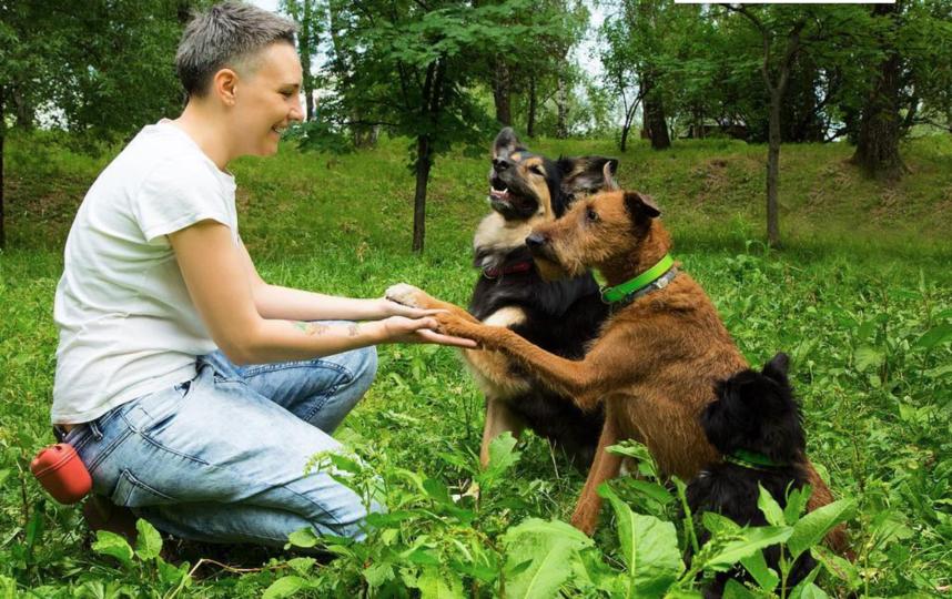 Эксперты рассказали, как воспитать идеальную собаку. Фото instagram.com/pibo_dog