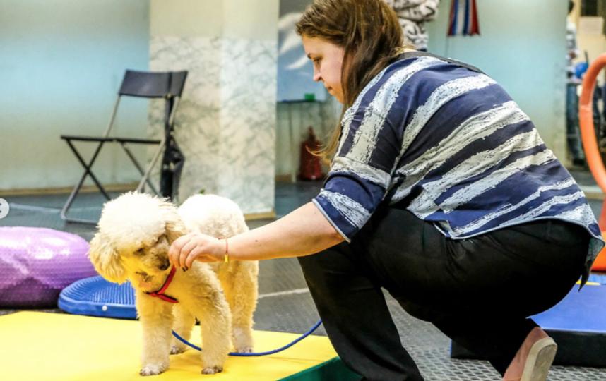"""Эксперты рассказали, как воспитать идеальную собаку. Фото instagram.com/pibo_dog, """"Metro"""""""