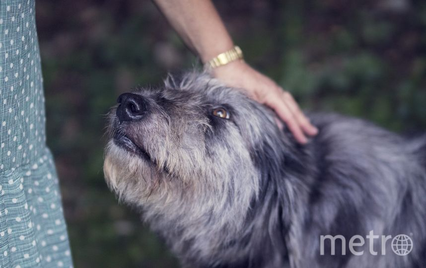 30 ноября отмечается Международный день домашних животных. Фото Pixabay