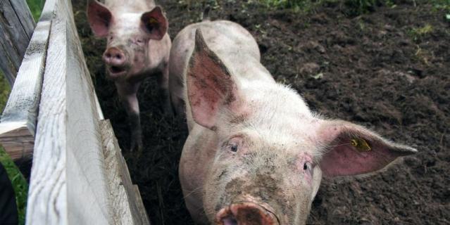 30 ноября отмечается Международный день домашних животных.