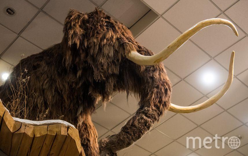 Музей мамонтов. Фото AFP