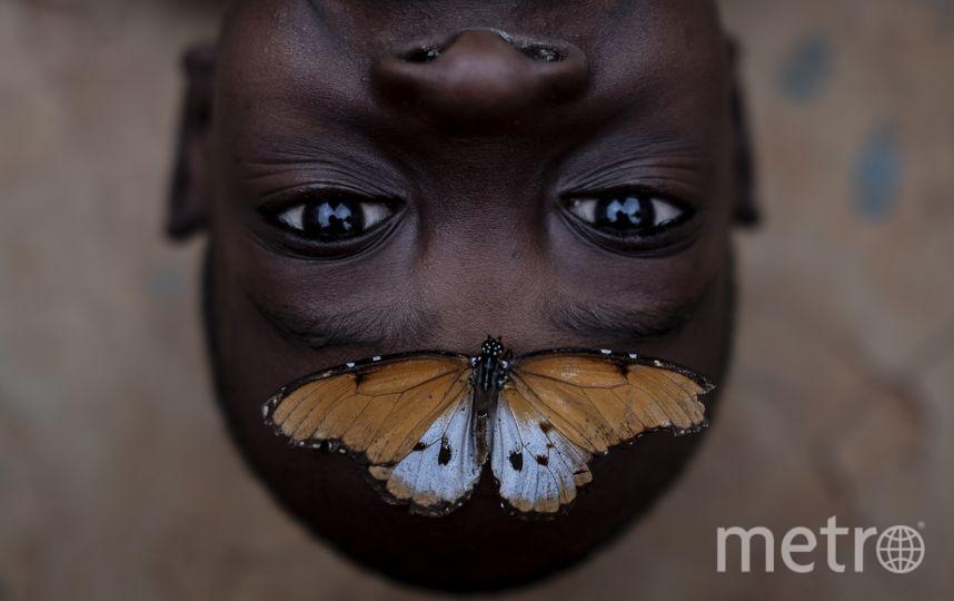 Бэнсон и бабочка. Фото: Эмилио Апарисио Р. Фото www.metrophotochallenge.com