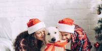 SMS от налоговой: чем заняться сразу после Нового года