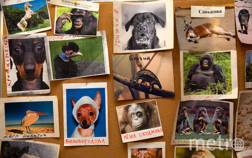 Доска с портретами животных, похожих на сотрудников РАМТ. Фото Василий Кузьмичёнок