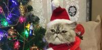 Новогодние котики и собачки поднимают настроение: фото