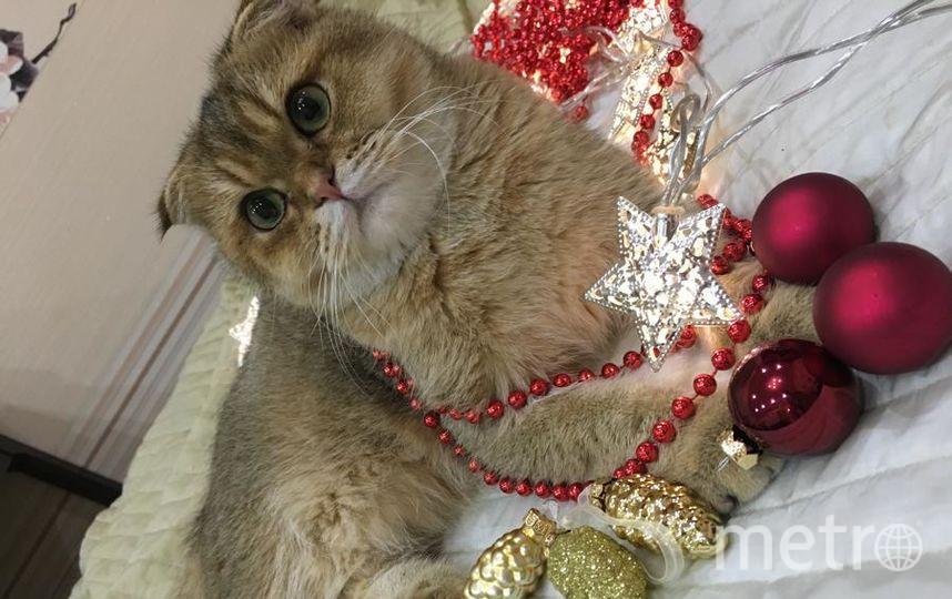 """Наш котёнок Рики помогает готовиться к Новому году и наряжать ёлочку! Фото Дарья, """"Metro"""""""