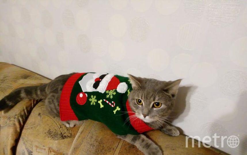 """Меня зовут Кузьменко Ирина, котика - Ричард. Фото """"Metro"""""""