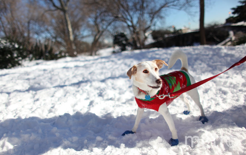 Как защитить собачьи лапы от реагентов зимой. Фото Getty