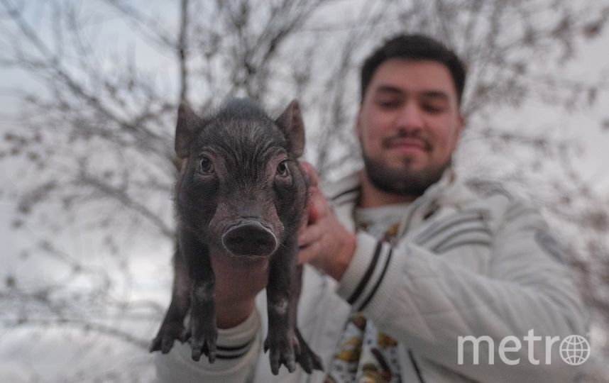 """Малыш Рокки на прогулке. Фото Алена Бобрович., """"Metro"""""""