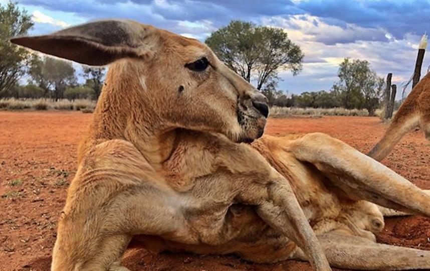 игровой автомат зоопарк кенгуру