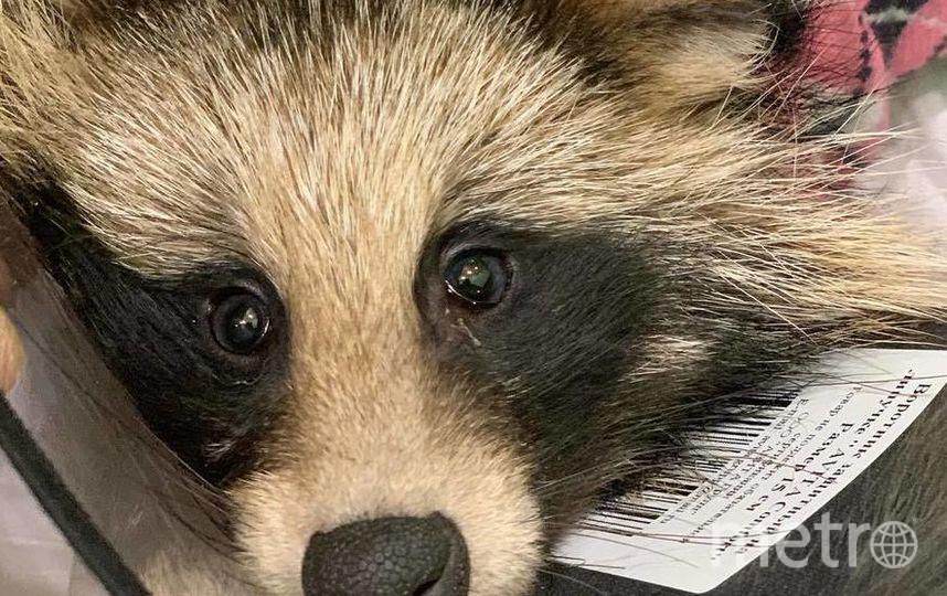 Больное животное удалось поймать и спасти. Фото https://vk.com/koshkispas