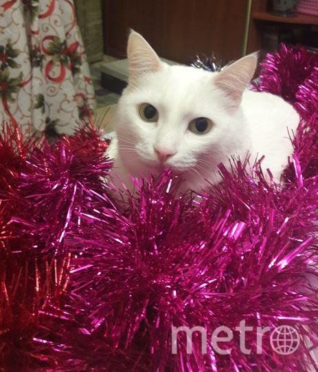 Присылаю фото нашего любимчика- кота Марсика! Каждый год, под его чутким руководством, наша семья наряжает ёлку к зимнему празднику..От Нового года ждём чуда!..И наш Марсик тоже ждёт Новый год! Фото Конатурова Екатерина