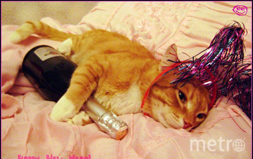 Это наш кот Мишка. Ему уже 8 лет. К празднику готов полностью и даже немножко начал праздновать. Фото Татьяна