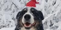 Новогоднее мимими: питомцы москвичей готовятся к празднику