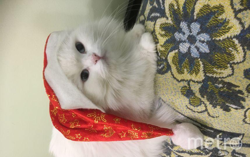 Наша альбиноска Дуська не слышит с рождения, но это не мешает нам любить её, а она в свою очередь отвечает нам тем же. Фото Новик Елена