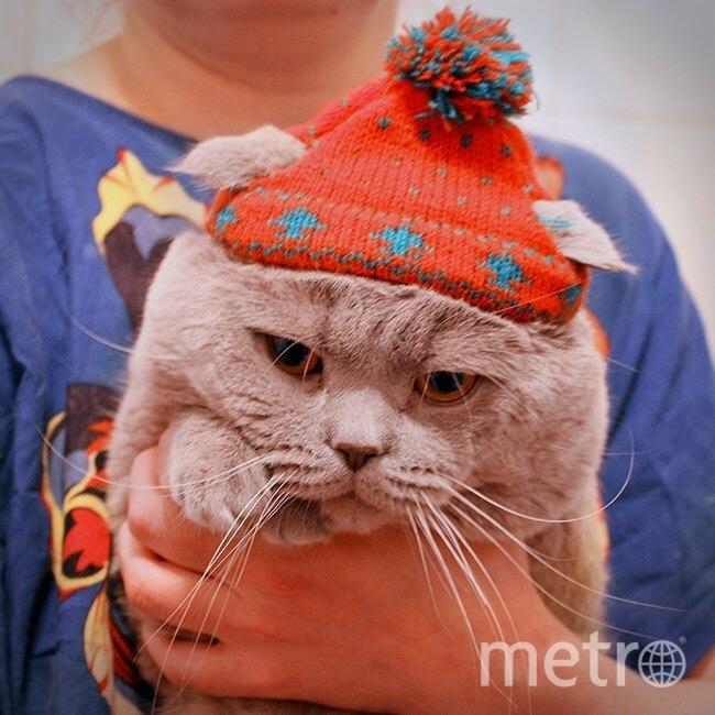 А это Леонард. Он не очень любит наряжаться, но очень любит Новый год. Фото Виктория