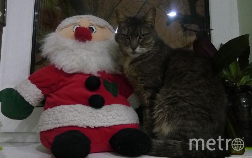 Коша и Санта. Фото Сашенька