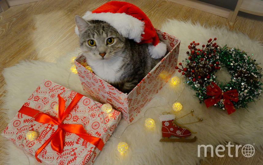 На фотографии мой кот Тимьян. Уже начинаем готовиться к Новому году, упаковываем подарки для родных и близких. Фото Валентина