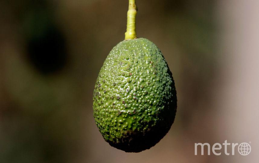 Авокадо часто используется в кулинарии в холодных блюдах. Фото Getty