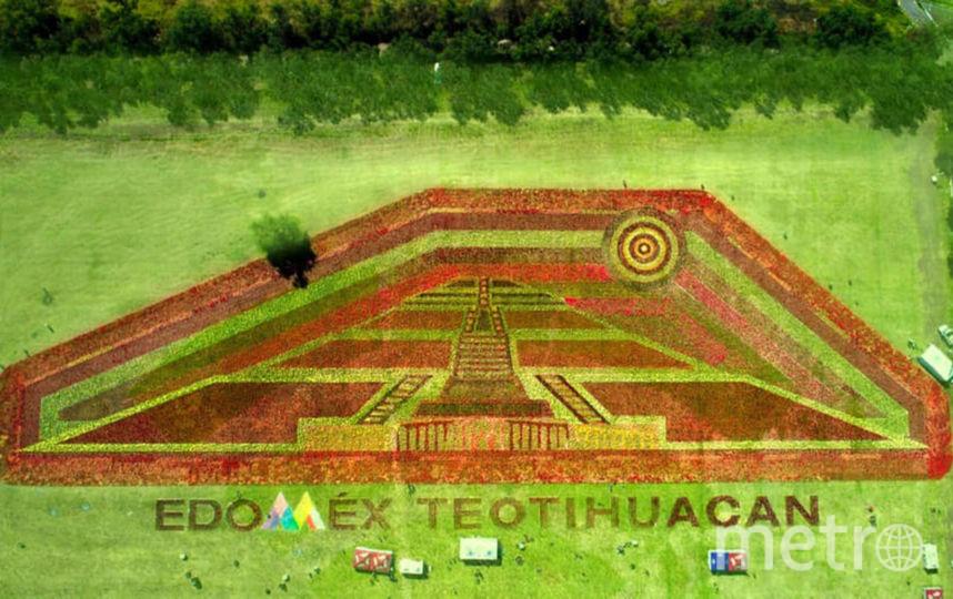 150 тысяч растений было использовано для создании ковра. Фото EDOMEX.