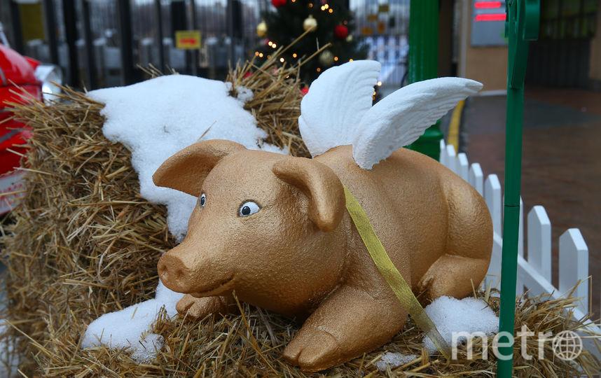 Свинки с крыльями подняли настроение посетителям. Фото Василий Кузьмичёнок