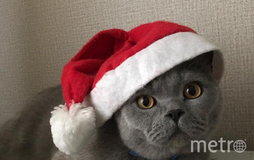 """Кот Месси. Ждем Новый год. Фото """"Metro"""""""