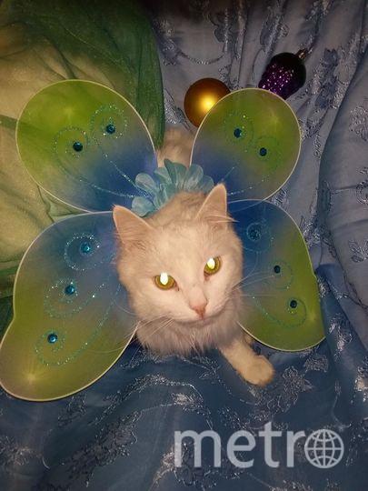 """Кот Чувак в новогоднем наряде бабочки. Светлана. Фото """"Metro"""""""