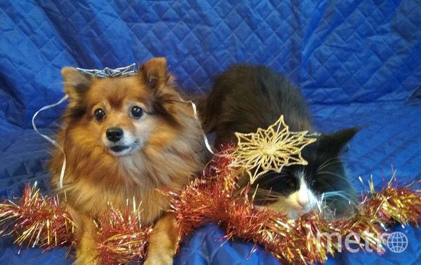 """фотографии моих питомцев; Кити и Виши, ожидающих Новый год. Фото Наталия, """"Metro"""""""