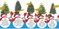 Как выбрать новогоднюю ёлку