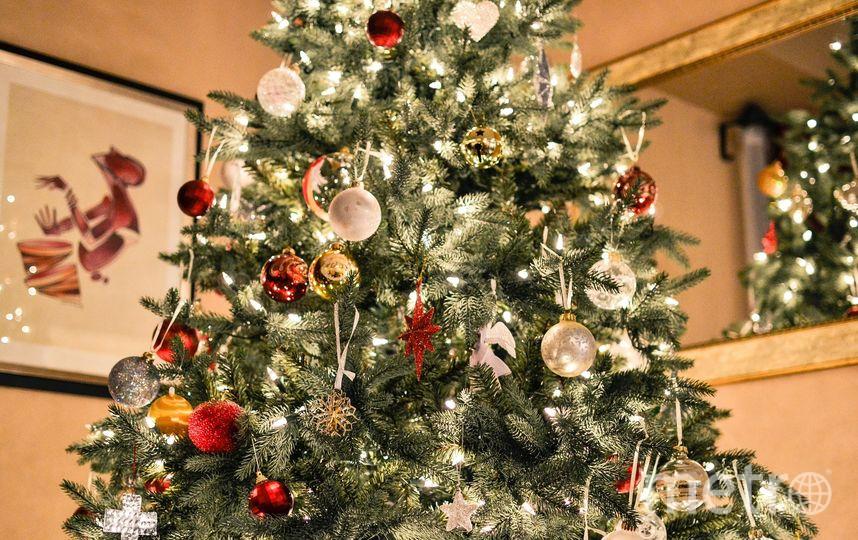 Как выбрать новогоднюю ёлку. Фото pixabay