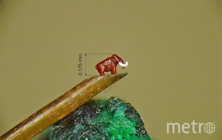 Мамонт сибиряка. Фото Владимир Анискин