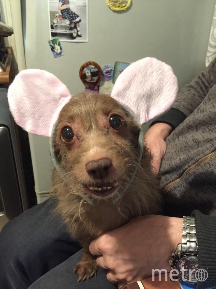 Это фото нашей собаки, зовут ее Ляля доя домашних Буся. Фото Ольга