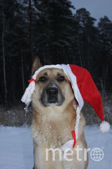 Рэм, в образе снегурочки. Фото Анастасия