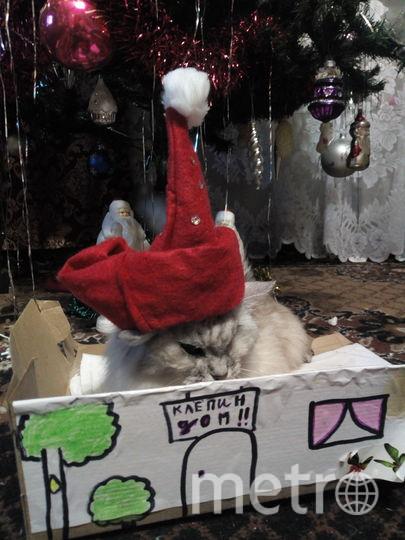 Кошку зовут Клёпа. Фото Юлия