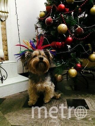 Елку и Боню нарядили, к Новому году готовы! Фото Елена