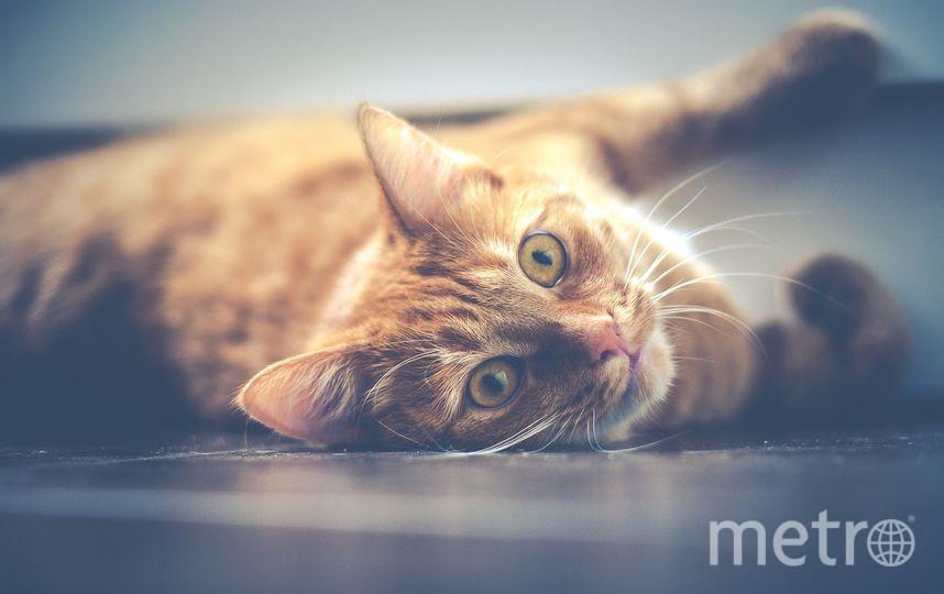 Госдума приняла закон об обращении с животными спустя восемь лет. Фото pixabay