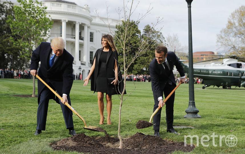 """Дональд Трамп и Эммануэль Макрон сажают """"деревья дружбы"""" в саду Белого дома. Фото Getty"""