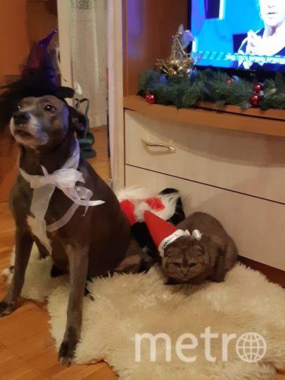 Собака Флора и кот Боня вместе со страной ждут Новый Год! Фото Анна