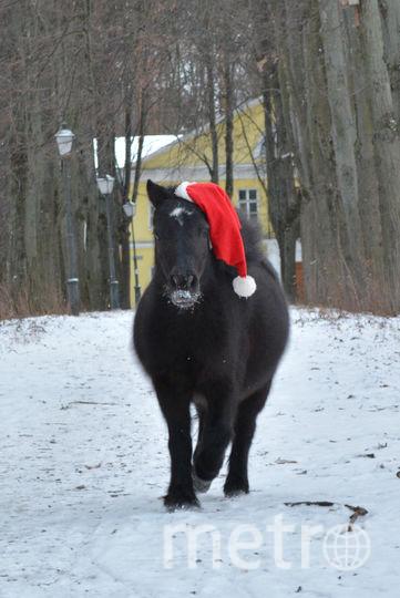 Новогодний пони Пуфик, родился 1 января 2010 года. Фото Егор