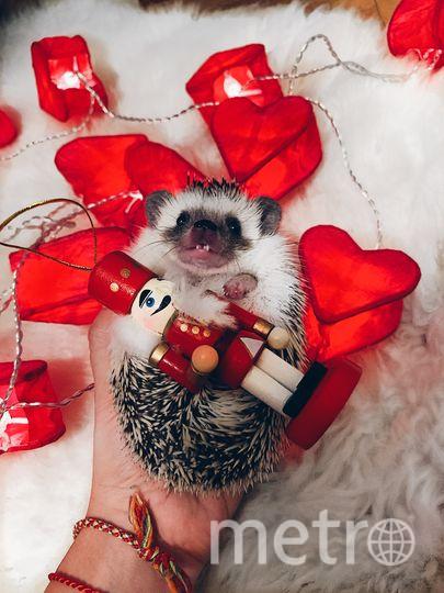 Посылаю Вам моего новогоднего ежа) Это ее первые рождественские праздники. Фото Валентина
