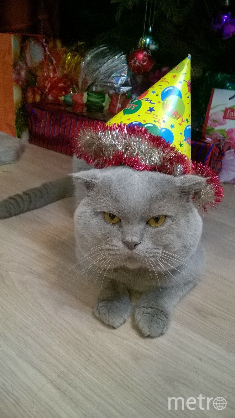 Это наш кот Плюша. Фото Мария