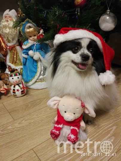 Это Герда - моя любимая собака! Шпиц! Ей 4 года. Мой верный друг! Фото Алина