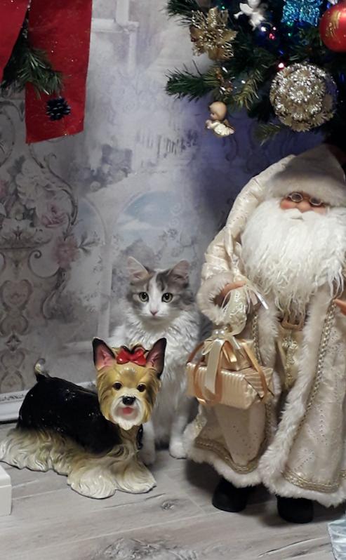 Нашу кошечку зовут Санта. Это фото мы назвали Санта и Санта. Она у нас очень любознательная и очень любит Новый год.. Фото Анна