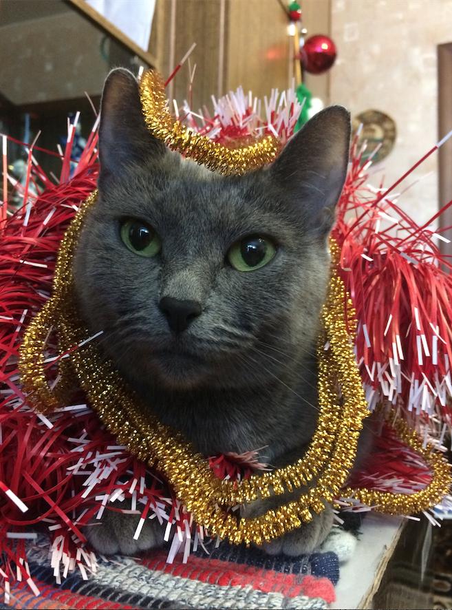 Кошку зовут Ева.. Фото Татьяна