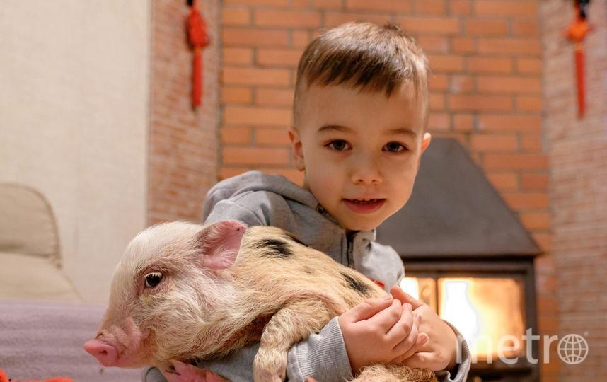 "Мини-пига надо воспитывать с детства. Фото Алена Бобрович, ""Metro"""