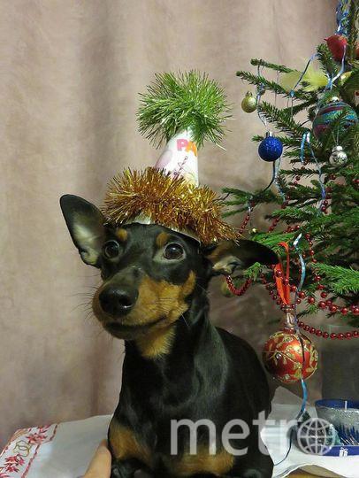 """Тонечка поздравляет всех с Наступающим Новым Годом! Фото """"Metro"""""""
